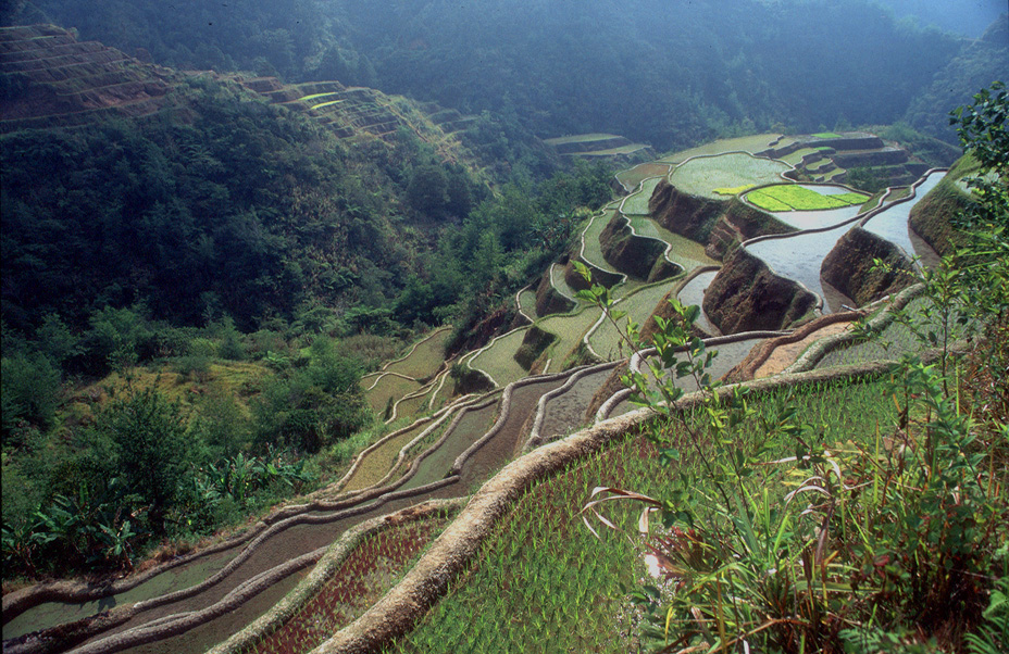 banaue 4 modifie - Beautiful Places In The World